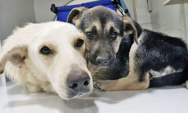 DOGS KILLER CAPTURED IN LEBANON, BUT MUM AND PUPPY ARE NOW SAFE