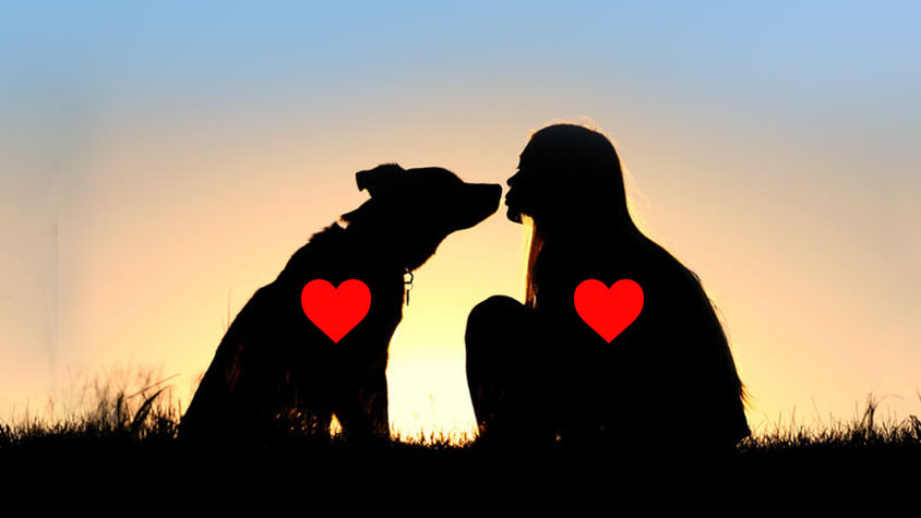 INTERNATIONAL DOG DAY: A SPECIAL DAY TO CELEBRATE ALL DOGS AROUND THE WORLD!
