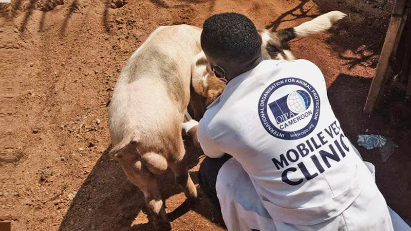 OIPA CAMEROON, THE FIRST ANIMAL RIGHTS ASSOCIATION TO CREATE A MOBILE VETERINARY CLINIC IN THE COUNTRY