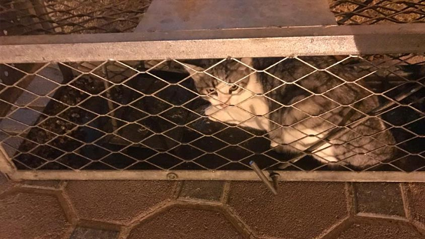 DUBAI, THE BLAME GAME OF LOCAL AUTHORITIES: STRAYS LEFT WITHOUT FOOD AND WATER OR POISONED AND NO ONE IS TAKING RESPONSIBILITY