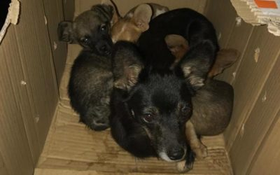 A MUM WITH FOUR PUPPIES CLOSED IN A CARTON BOX AND DOOMED TO DIE, FINALLY RESCUED BY OIPA ITALY'S VOLUNTEERS. NOW THEY NEED MEDICAL CARE TO SURVIVE