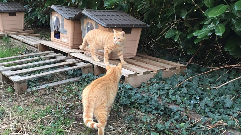 """""""ALICE'S CATS"""" UNDER THE RAIN AND BENEATH THE SNOW: OIPA'S VOLUNTEERS IN MILAN (ITALY) DO NOT LEAVE THEM ALONE. DO THE SAME, SUPPORT TO THE PROJECT!"""