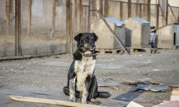 ANIMAL FRIENDS CROATIA MEETS THE MAJOR OF ZAGREB TO SUGGEST IMPROVEMENTS FOR THE SHELTER OF DUMOVEC AND OTHER SHELTERS IN THE COUNTRY