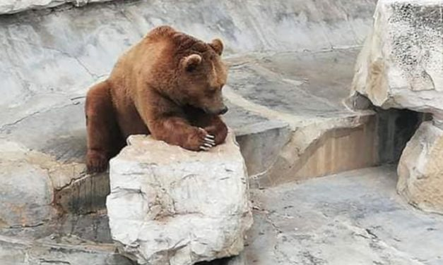 ANIMALS HELD IN A DREADFUL STATE AT BELVEDERE ZOO IN TUNIS