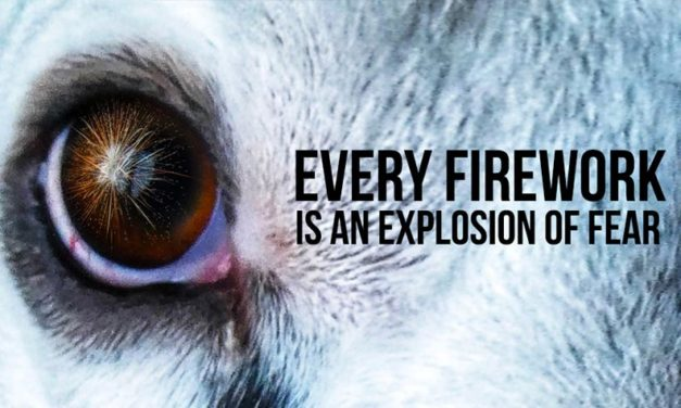 EVERY FIREWORKS IS FOR ANIMALS JUST AN EXPLOSION OF FEAR. 10 SIMPLE TIPS FOR PROTECTING ANIMALS