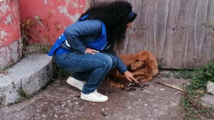PLUTO AND THE WILL TO SURVIVE: SENTENCED TO DEATH, HE WAS DRAGGING WITH THE LAST STRENGHTS LEFT. RESCUED BY OIPA'S ITALY VOLUNTEERS, HE IS NOW SAFE