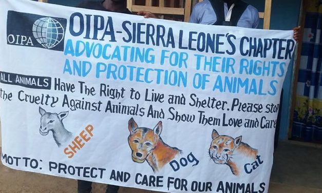 """A NEW CHAPTER BEGINS: """"PROTECTION AND CARE FOR OUR ANIMALS"""" THANKS TO OIPA SIERRA LEONE"""