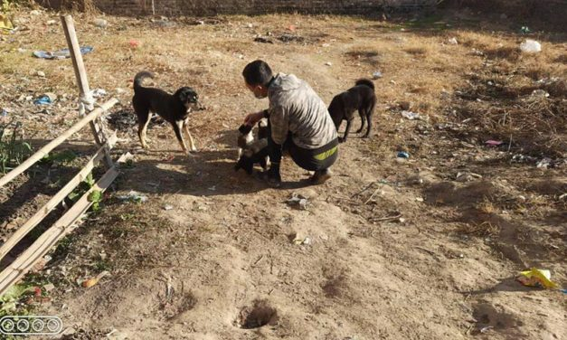 STRAY DOGS IN NEPAL: NAWRC – OIPA NEPAL LOOK AFTER THEM WITH A NEUTERING AND VACCINATION PROGRAM
