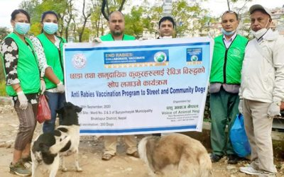 LET'S START WITH THE ABC! THE ANIMAL BIRTH CONTROL PROGRAM FOR STRAY DOGS OF VOICE OF ANIMAL NEPAL: SPAY/NEUTER AND ANTI RABIES VACCINATION ACTIVITIES