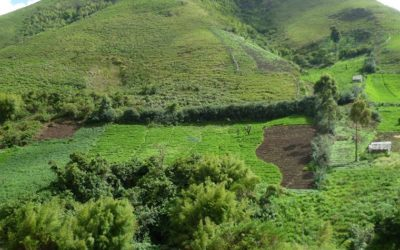 MOUNT BAMBOUTOS FOREST CONSERVATION PROJECT – OIPA CAMEROON RAISES AWARENESS ON SUSTAINABLE FOREST MANAGEMENT