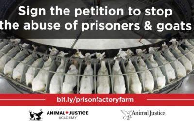 STOP CANADA'S PRISON FACTORY FARM PROJECT!