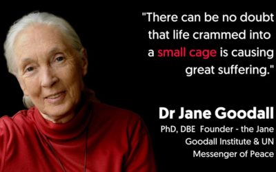 """""""END THE CAGE AGE"""": JANE GOODALL AND OTHER 140 SCIENTISTS SUPPORT AN END TO CAGED FARMING THROUGHOUT THE EU"""