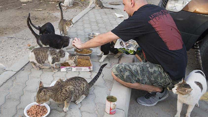 DUBAI, THE CITY OF LUXURY AND OSTENTATION IS INSTEAD A TERRIBLE HELL FOR STRAYS. RAISE YOUR VOICE AND HELP US STOP THE MASSACRE