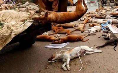 A MASS CULLING OF STRAYS IN PAKISTAN: 25,000 DOGS EXPECTED TO BE KILLED IN THE NEXT FEW WEEKS. OIPA INTERNATIONAL WRITES TO THE PRIME MINISTER