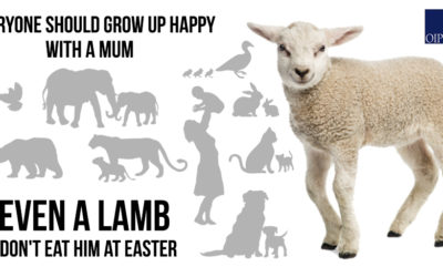 EVERYONE SHOULD GROW UP HAPPY WITH A MUM, EVEN A LAMB. DON'T EAT HIM AT EASTER