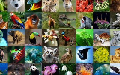 WORLD WILDLIFE DAY: A DAY TO CELEBRATE WORLD'S WILD ANIMALS AND PLANTS