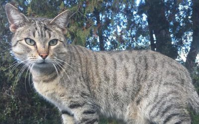 """STRAY CATS OF CORSE ISLE WILL NOW HAVE A FULL BELLY FOR A LITTLE WHILE. A BIG """"THANK-YOU"""" TO ALL OF YOU"""
