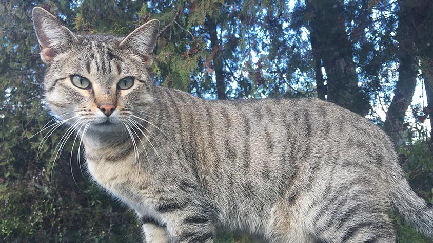 """STRAY CATS ON CORSE ISLE WILL HAVE A FULL BELLY FOR A WHILE. A BIG """"THANK-YOU"""" FROM THEM AND FROM THE VOLUNTEERS OF OIPA CORSE"""