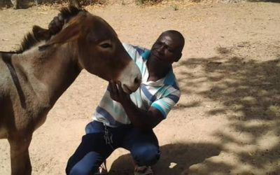 A CAMPAIGN TO ENCOURAGE GOOD CARE OF DONKEYS IN CAMEROON
