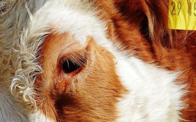 THE EUROPEAN COMMISSION PUBLISHES THE EVALUATION OF EU'S STRATEGY FOR THE PROTECTION AND WELFARE OF ANIMALS