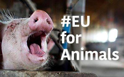 OIPA IS PARTNER OF THE CAMPAIGN #EUFORANIMALS. WE DEMAND A EU COMMISSIONER FOR ANIMAL WELFARE TO GUARANTEE ANIMALS MORE RIGHTS