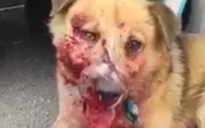 KILLING OF STRAY DOGS IN AZERBAIJAN STARTS FROM BAKU AIRPORT. HELP US ASK FOR JUSTICE AND STOP THIS OUTRAGE