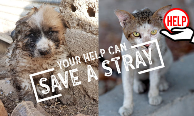 """STRAYS ARE REJECTED AND ABUSED IN MANY COUNTRIES OF THE WORLD. CHOOSE TO SUPPORT THE PROJECT OF OIPA INTERNATIONAL AND HELP US TO """"SAVE A STRAY"""""""
