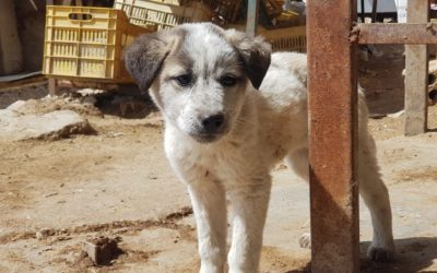 A STORY OF CARE AND COMPASSION FOR STRAYS IN KOBANI, NORTHERN SYRIA