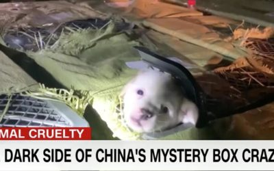 SHOCKING INVESTIGATION: THE DARK SIDE OF CHINA'S MYSTERY BOX CRAZE