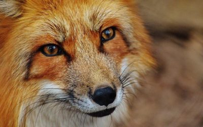 ISRAEL, FIRST COUNTRY IN THE WORLD TO BAN BY LAW FUR SALES