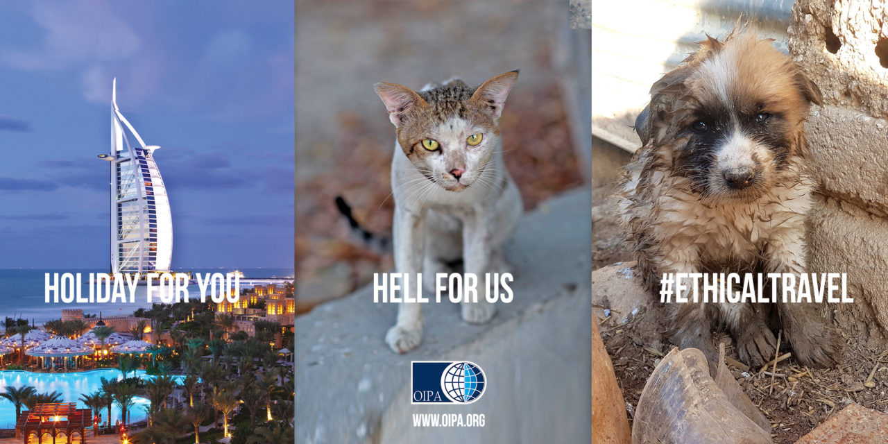 #ETHICALTRAVEL, OIPA INTERNATIONAL'S CAMPAIGN ON LONDON'S BUSES. SOME TOURIST PARADISES ARE HELL FOR STRAY ANIMALS