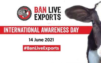 BAN LIVE EXPORTS INTERNATIONAL AWARENESS DAY. THIS CRUEL PRACTISE MUST END: ANIMALS ARE SENTIENT BEINGS!