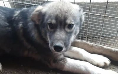 ABANDONMENT AND LACK OF NEUTERING PROGRAMMES INCREASE THE NUMBER OF STRAY ANIMALS IN ROMANIA