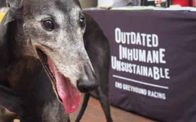 A NEW ENTRY IN OIPA'S FAMILY TO FREE THE HOUNDS IN WESTERN AUSTRALIA