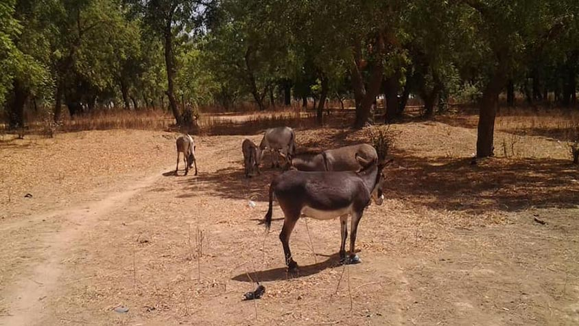 CONGRATULATION TO OIPA CAMEROON, WINNER OF THE WORLD ANIMAL DAY GRANT. THEIR PROJECT WILL ASSIST DONKEYS AND HORSES NEGLECTED