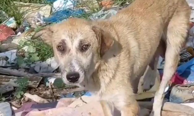 OIPA TURKEY ASKS SUPPORTERS TO HELP BUYING FOOD FOR STRAY DOGS OF KURTKOY FOREST