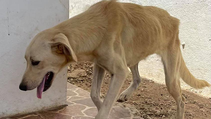 WHAT'S HAPPENING TO STRAYS IN ARUBA? ARE THEY NEUTERED AND RELEASED AS PROMISED OR NOT?