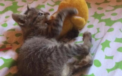 YOUR HELP HAS CONTRIBUTED TO PROVIDE CARE AND TREATMENT TO STRAY CATS OF OIPA CORSE