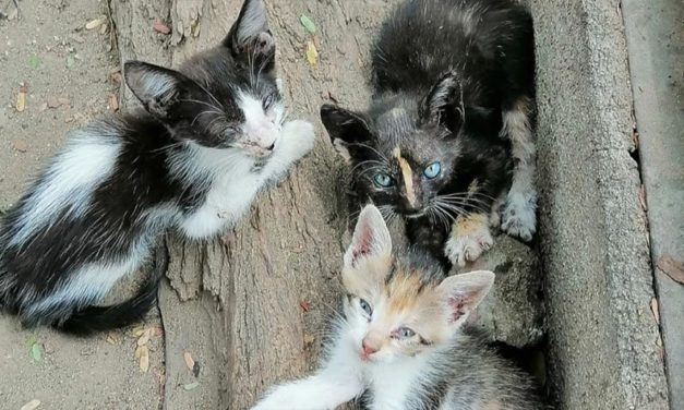 ABANDONED ANIMALS IN SANTA MARTA, COLOMBIA. GATIUS-UNIENDO VIDAS IS TRYING TO REDUCE THE FATAL CONSEQUENCES OF NOT NEUTERING