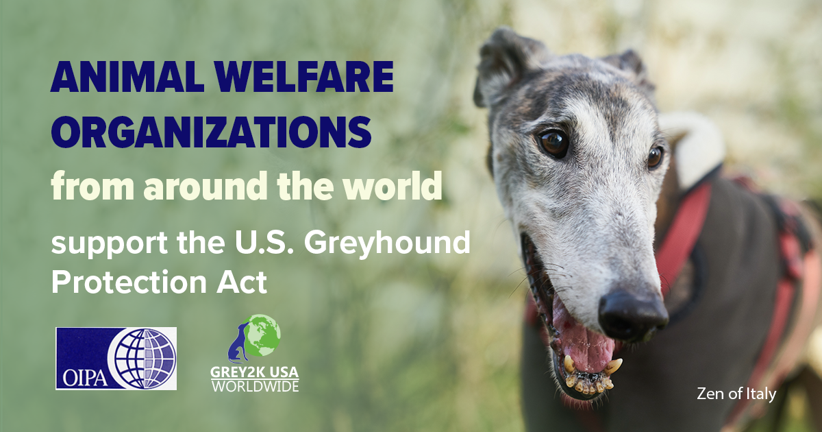 THE GLOBAL GREYHOUND COALITION, LED BY OIPA INTERNATIONAL, SENT A LETTER TO THE U.S. CONGRESS IN SUPPORT OF THE GREYHOUND PROTECTION ACT (H.R. 3335)