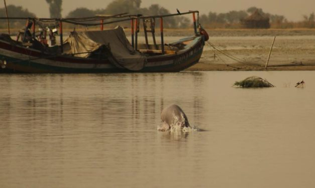 OIPA PAKISTAN – SOUTH PUNJAB PROPOSES A PROJECT FOR THE CONSERVATION OF INDUS RIVER DOLPHINS