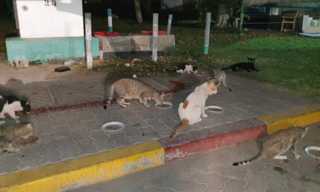 """THREE HUNDRED STRAY CATS IN DUBAI FED THANKS TO THE PROJECT """"SAVE A STRAY"""""""