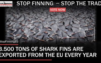 """OIPA SUPPORTS THE EUROPEAN CITIZENS' INITIATIVE """"STOP FINNING – STOP THE TRADE"""" TO END THE LUCRATIVE BUSINESS OF SHARK FINS FROM EUROPE! GIVE YOUR ADHESION!"""