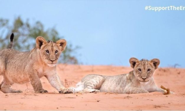 SIGN! URGE SOUTH AFRICAN GOVERNMENT TO FINALISE CONSERVATION POLICY TO SAFEGUARD THEIR WILDLIFE