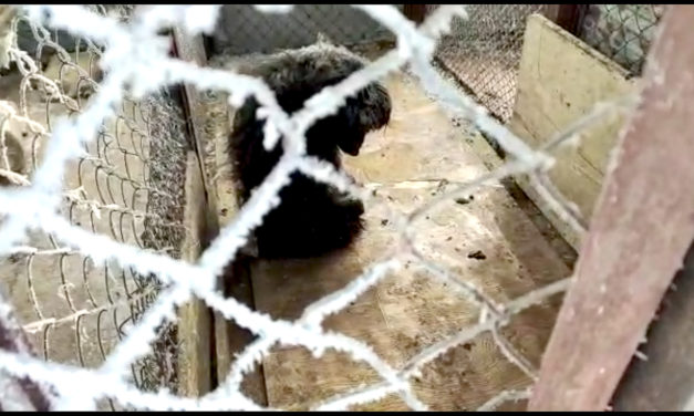 THE TERRIFYING LIFE OF STRAYS IN KAZAKHSTAN. ANIMALS ARE CRUELLY ABUSED AND SLAUGHTERED EVERY DAY
