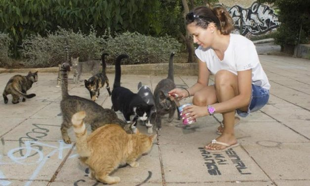 A BETTER QUALITY OF LIFE FOR ATHENS STREET CATS THROUGH FEEDING PROGRAMME, CARE AND PROTECTION GRANTED BY NINE LIVES GREECE'S VOLUNTEERS