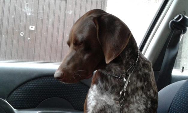 Cane chiuso in macchina quando fa caldo: è reato