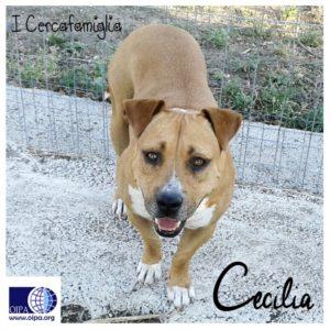 cecilia1-sito