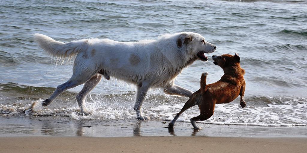 Sulla spiaggia con Fido: possiamo entrare?