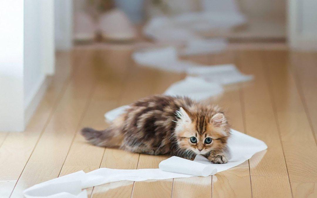 Perché il gatto sporca fuori dalla lettiera: i consigli di Samira Coccon, consulente in comportamento felino